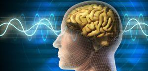 ondas cerebrais humanas