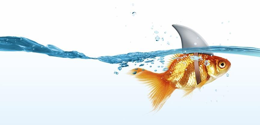 peixe querendo ser tubarão