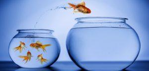 foto de peixe pulando para outro aquário